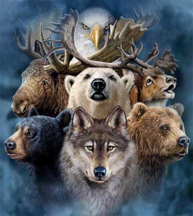 animal-spirits-final